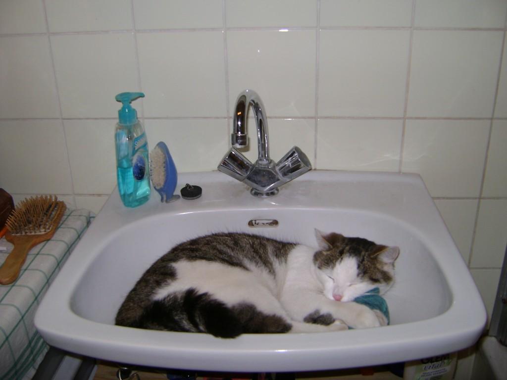 vor dem 3 wochen test 5 gefr ssige haustiger purina one katzenfutter test. Black Bedroom Furniture Sets. Home Design Ideas