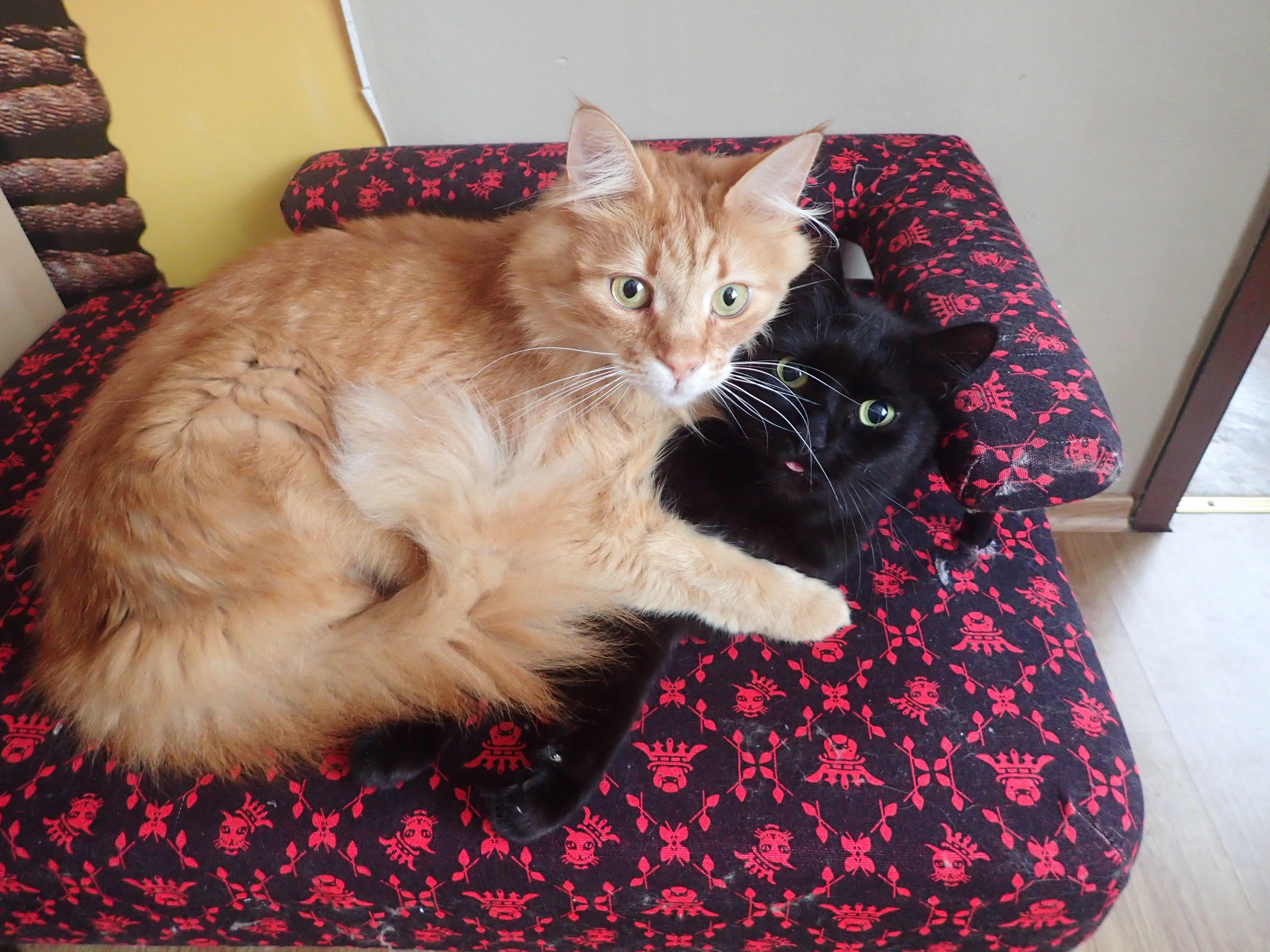 woche 3 unsre schleckerm ulchen purina one katzenfutter. Black Bedroom Furniture Sets. Home Design Ideas