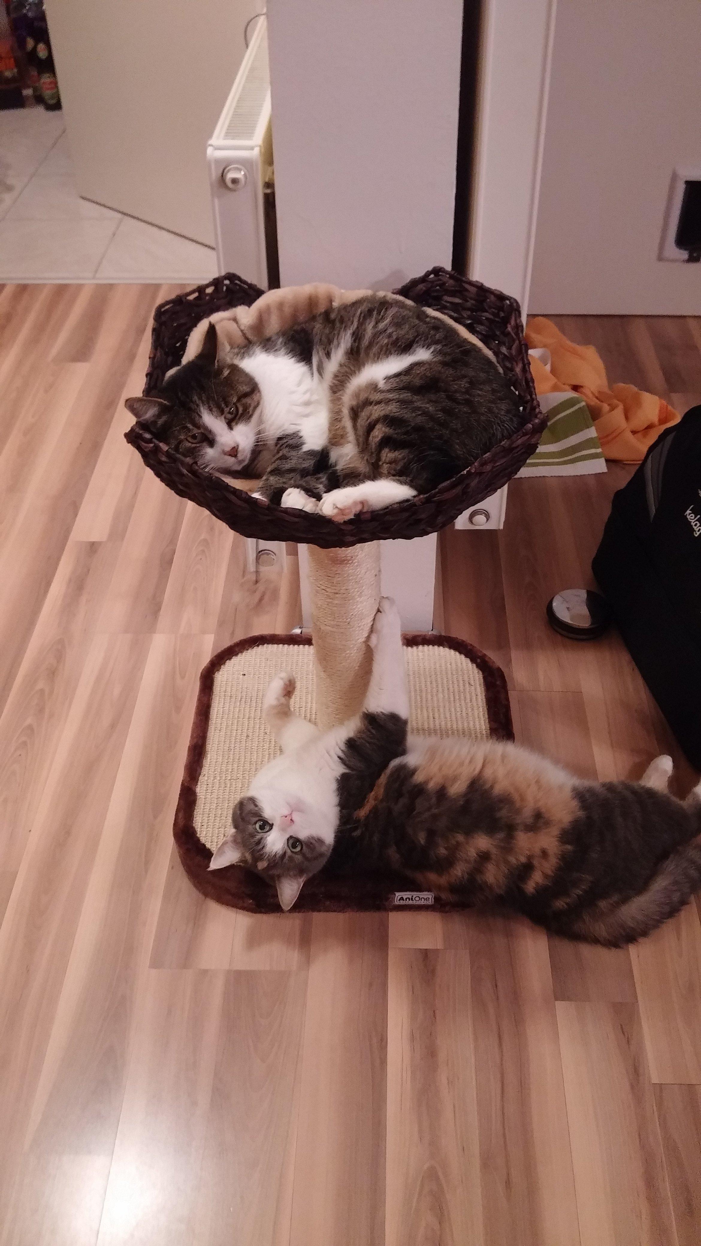 woche 3 gesunde fitte katzen purina one katzenfutter test. Black Bedroom Furniture Sets. Home Design Ideas