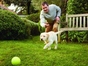 Labrador-Garten